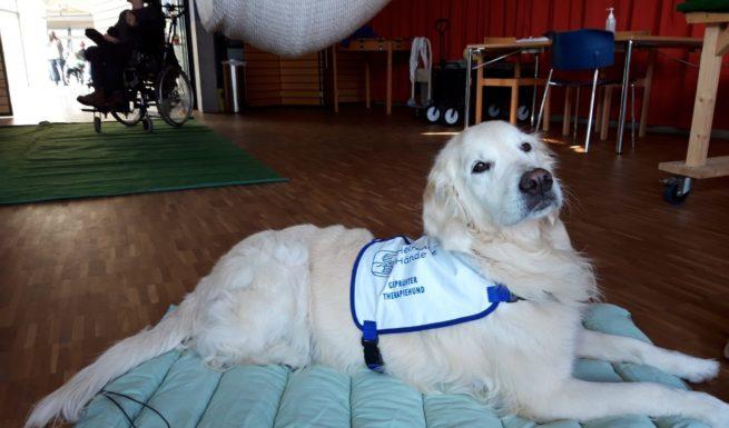 Therapiehund Luna wartet auf ihrer Decke