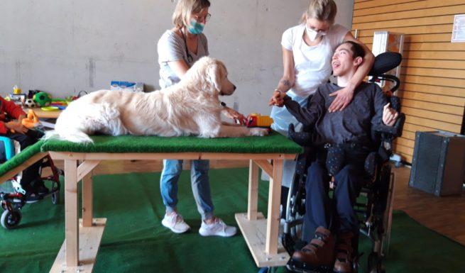 Teil der Hundetherapie